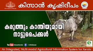 Success story on Rearing of 100 indigenous variety of cows by Sri.Vinod,  Pathanamthitta-599