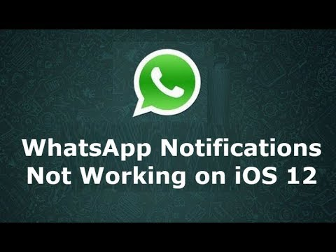 WhatsApp Notifications Not Working on iOS 12 (Fixed)