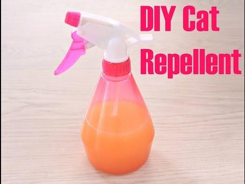 DIY CAT REPELLENT