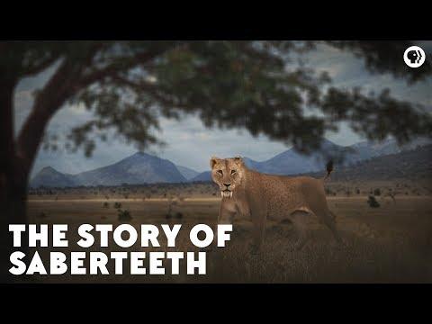 The Story of Saberteeth
