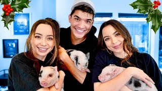Download ADORABLE PIGLETS Surprise On Merrell Twins! Video