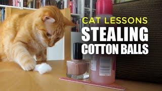 Cat Stealing Cotton Balls