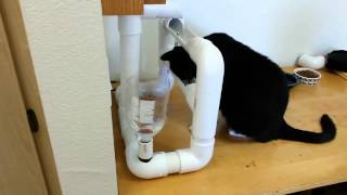 Cat water bowls are boring. Engineer Finds Solution.