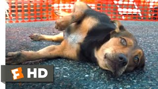 A Dog's Way Home (2018) - Hit by a Car Scene (8/10)   Movieclips