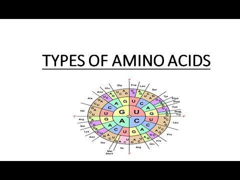 ESSENTIAL & NON-ESSENTIAL AMINO ACIDS