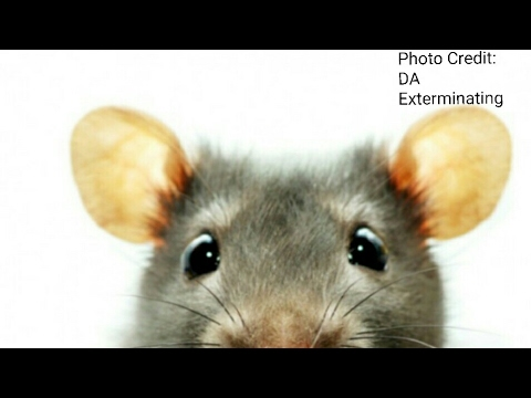 How to get rid of Mice, Rats, Ants and Roaches.
