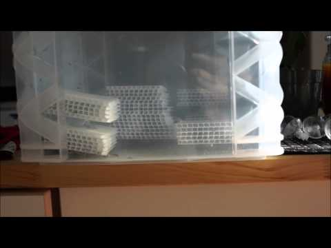 My easy & simple pod and brine shrimp culture