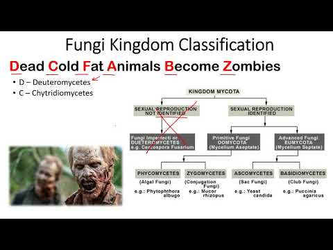 Kingdom Fungi classification trick to remember
