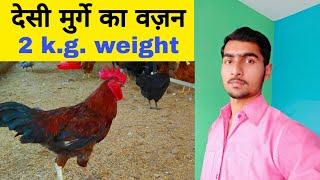 Desi Murgi Palan Part-5|Poultry Farming Business Ideas 2019|Apna