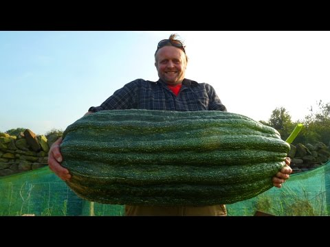 Allotment Diary : Where I Get my Giant Vegetable Seeds From.