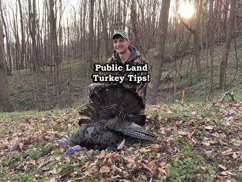 Turkey Hunting Tips for Public Land