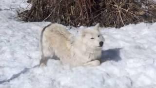 Hopi Loves Snow
