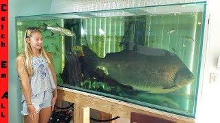 Download FISH TOO BIG to keep in HOME AQUARIUM! Video