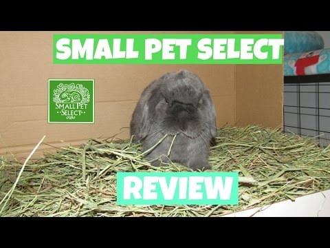 Small Pet Select Review and Unboxing    LovableLop