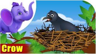 Crow | Song on birds | 4K | Appu Series