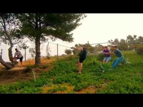 How to cut down a pine tree near a house