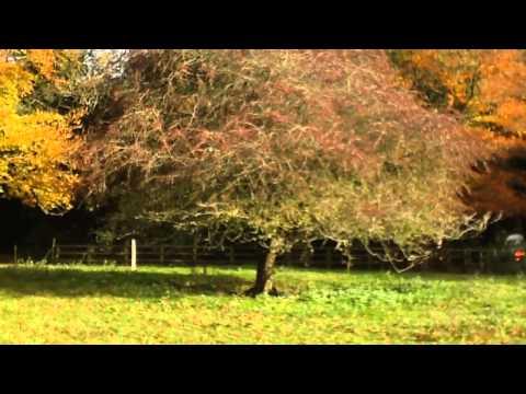 Hawthorn20 seconds