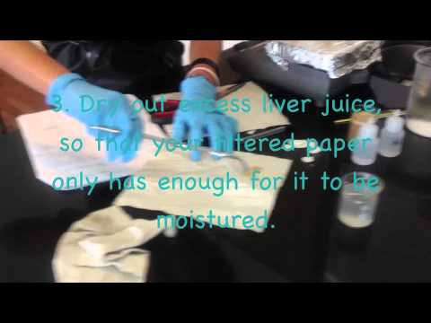 Science Enzyme Lab Video
