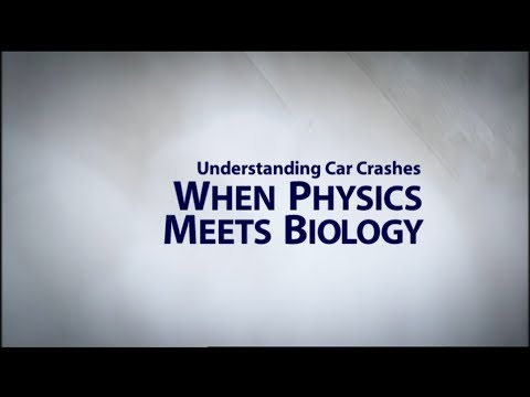 Understanding Car Crashes: When Physics Meets Biology