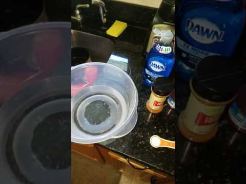 Homemade Natural Aphid Solution