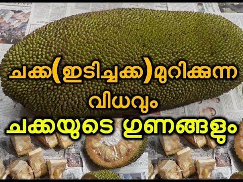 ചക്ക(ഇടിച്ചക്ക)മുറിക്കുന്ന വിധവും ചക്കയുടെ ഗുണങ്ങളും Idichakka murikkunna vidham
