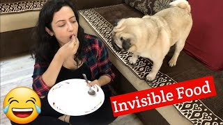 Eating 'Invisible Food' infront of my Pug | Simba's Funny Reaction