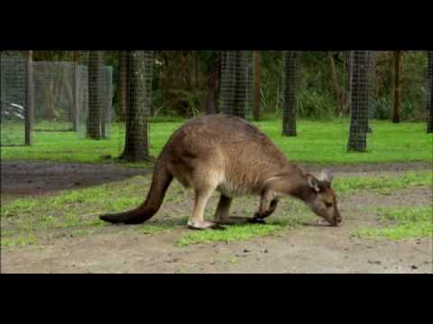 Whats the best way of geting around? - Hopping like a kangaroo