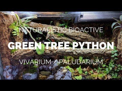 Building a Naturalistic Bioactive Green Tree Python Vivarium / Paludarium