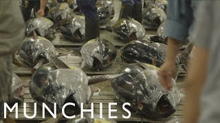 Appetite for Destruction: Eating Bluefin Tuna Into Extinction