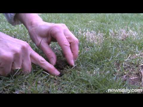 (040909) All Natural Organic Grass Fertilizer Promotes Lush Green Grass