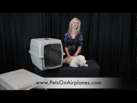 Pets On Airplanes: