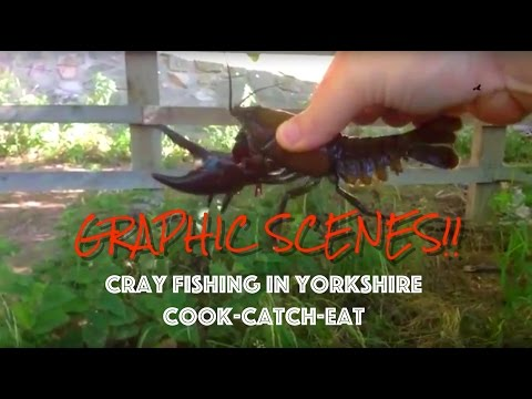 GRAPHIC!!! Crayfishing in Yorkshire. Catch, Cook & Eat.