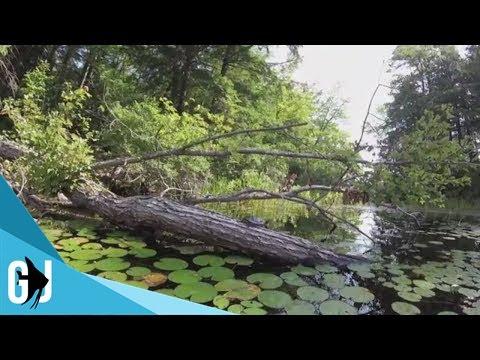 Underwater Video: Lake Winnipesaukee Native Fish and Turtles 2017