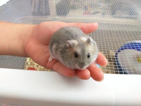 Diy Hamster Bin Cage