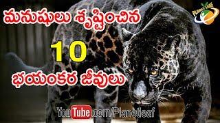 Top 10 Weird Hybrid Animals On Earth || మనుషులు శృష్టించిన 10 వింత జంతువులు ఇవే || With Subtitles