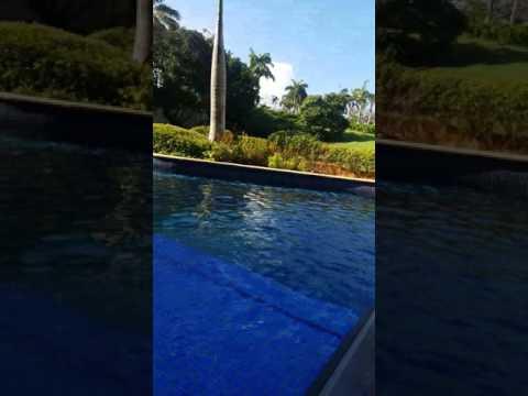 Swim up King Room Hyatt Ziva Montego Bay Jamaica