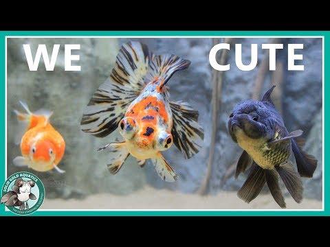 Goldfish Aquarium Upgrade