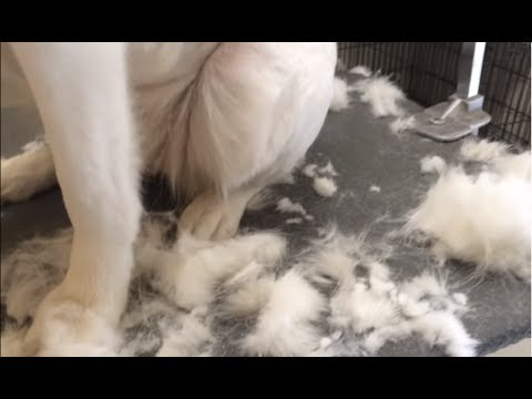 Top Ten Shedding Dogs | Top Heavy Shedding Dogs | Top 10 Pets