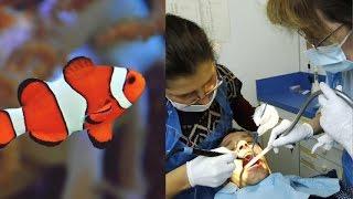 لماذا يضع اطباء الاأسنان حوض الاسماك بغرفة الانتظار؟