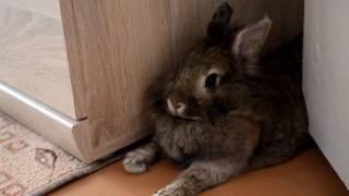 Как ухаживать за кроликом летом  лайфхаки!Конкурс!