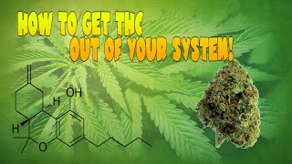 How To Get Thc Out Of Your System
