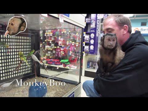 Monkey Visits Pet Smart!