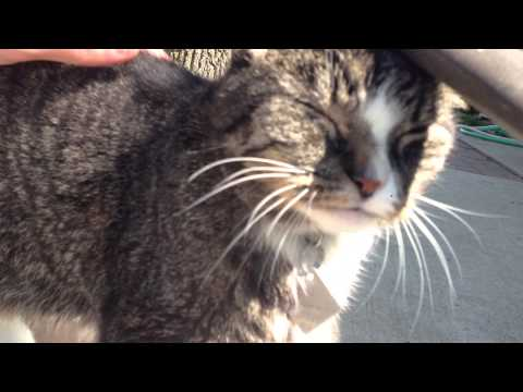 Blind and Deaf Cat