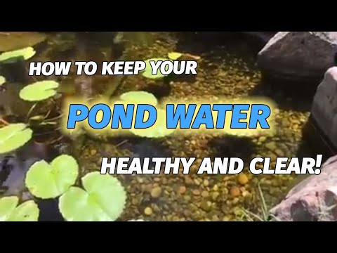 How to keep your back yard garden pond clean