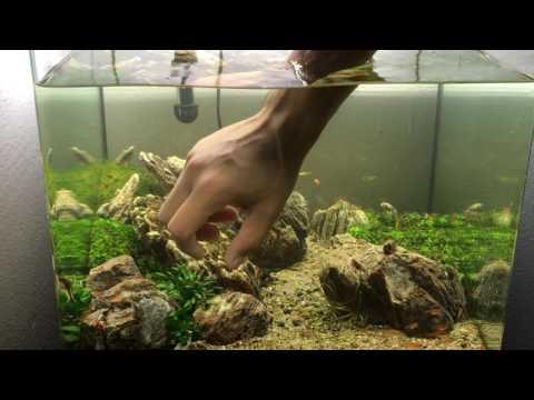 Aquarium maintenance   how to clean a fish tank