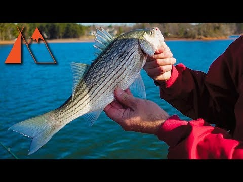 Fishing for Striped Bass on Lake Norman