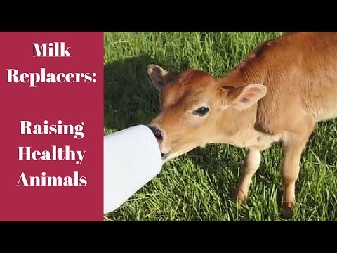 Milk Replacer: Raising Healthy Animals