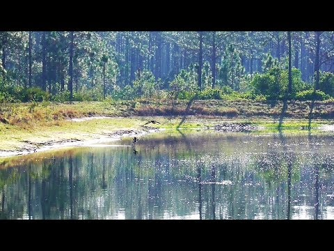 SWFL Eagles_A Fish For Each, Upside Downs, Duck Hunt At Yonder Pond 04-19-18