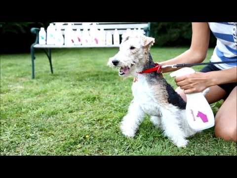 Itchy Dog Skin - Remedies to Help Your Dog Itching Stop Fast From Allergies and Dog Skin Problems