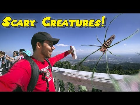 The Scariest Trail In Chiang Mai: Conquering Doi Suthep Mountain